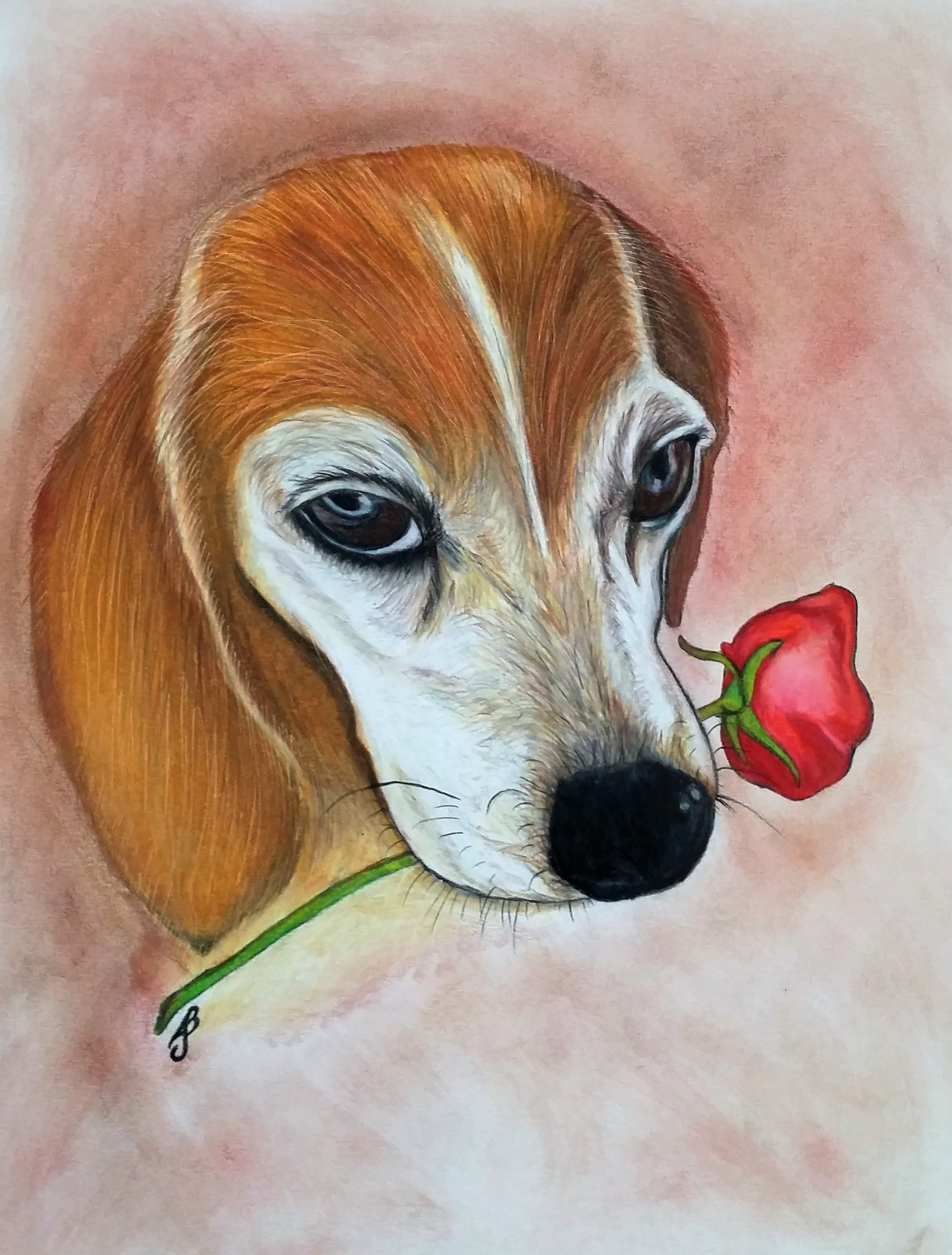 Beagle and Rose in Color Pencil