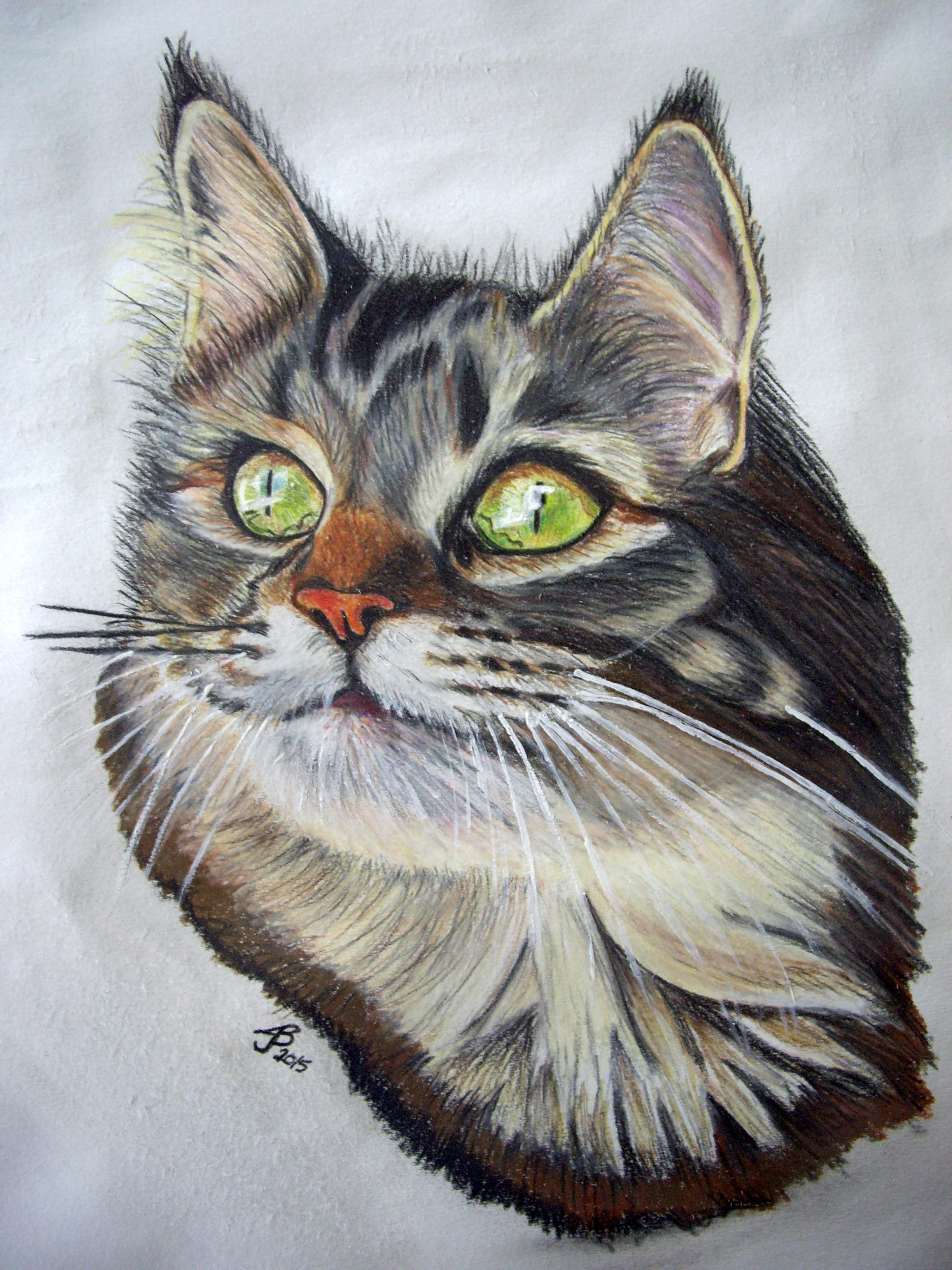 Green Eyed Cat in Color Pencil